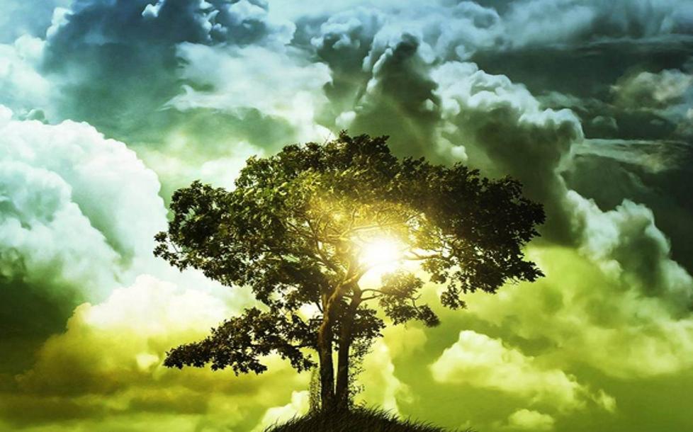 Tree_A-co-kdyz-svou-intuici-neslysim